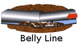 Belly in lateral line